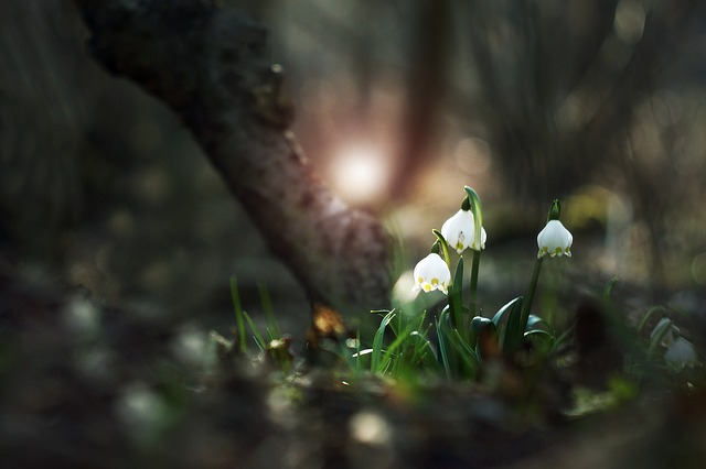 bledule v lese