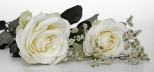 bílé růže