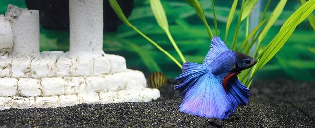 modrá rybička.jpg
